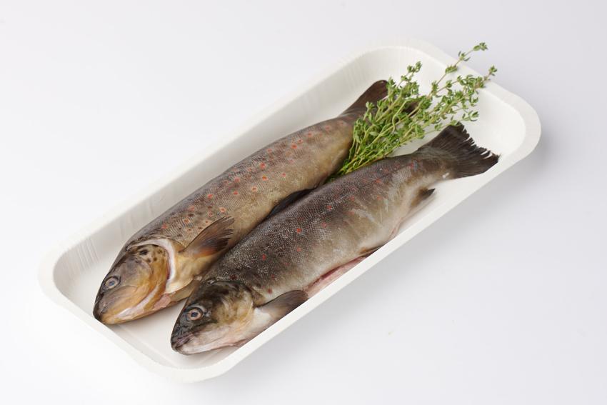 Kartontasse für Fisch